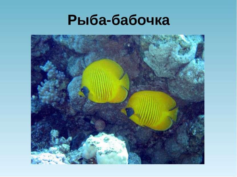 Рыба-бабочка