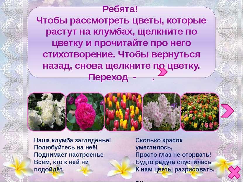 Ирис - радуга-цветок, Наш касатик милый, Или просто - петушок, - Всё равно кр...