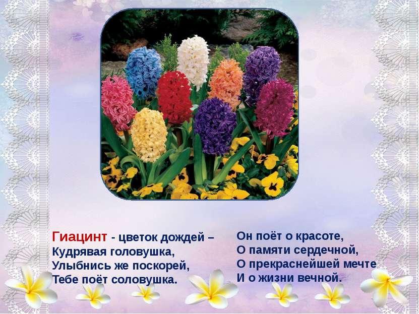Астры - звездочки земли, В школьных грядках зацвели, Самым дивным разноцветье...