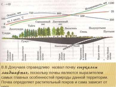 В.В.Докучаев справедливо назвал почву «зеркалом ландшафта», поскольку почвы я...