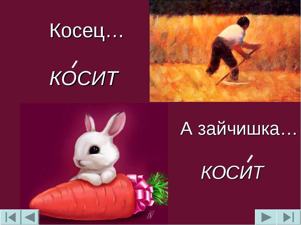 Косец… КОСИТ А зайчишка… КОСИТ