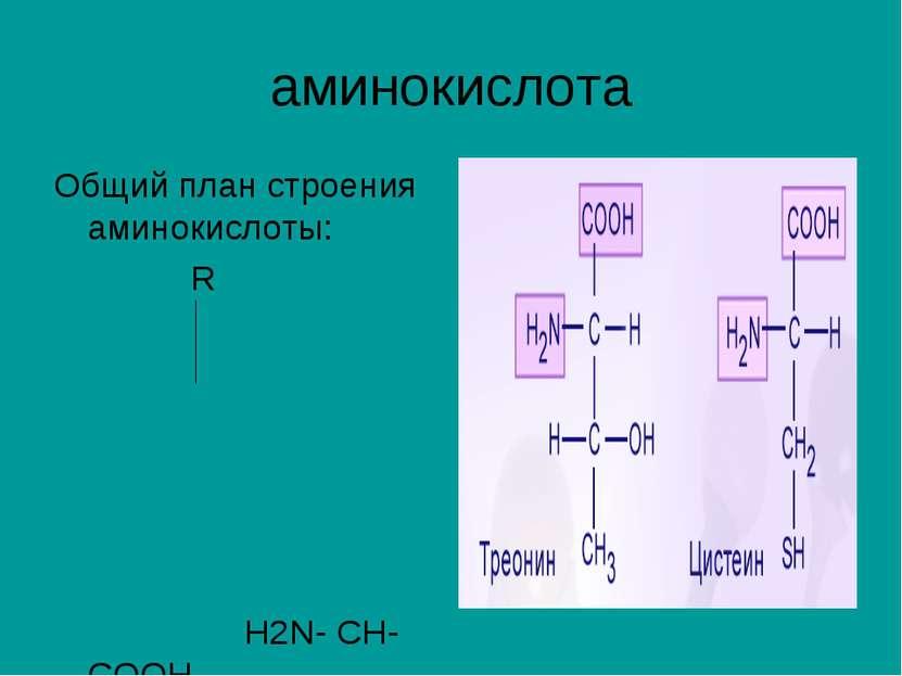 аминокислота Общий план строения аминокислоты: R H2N- CH-COOH