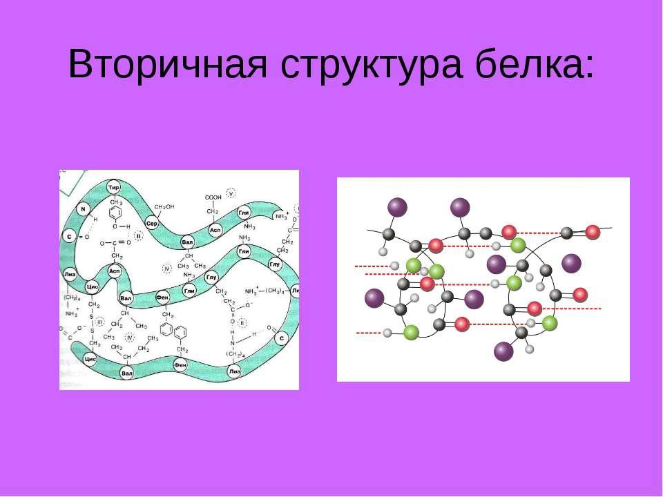 Вторичная структура белка: