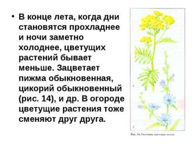 В конце лета, когда дни становятся прохладнее и ночи заметно холоднее, цветущ...