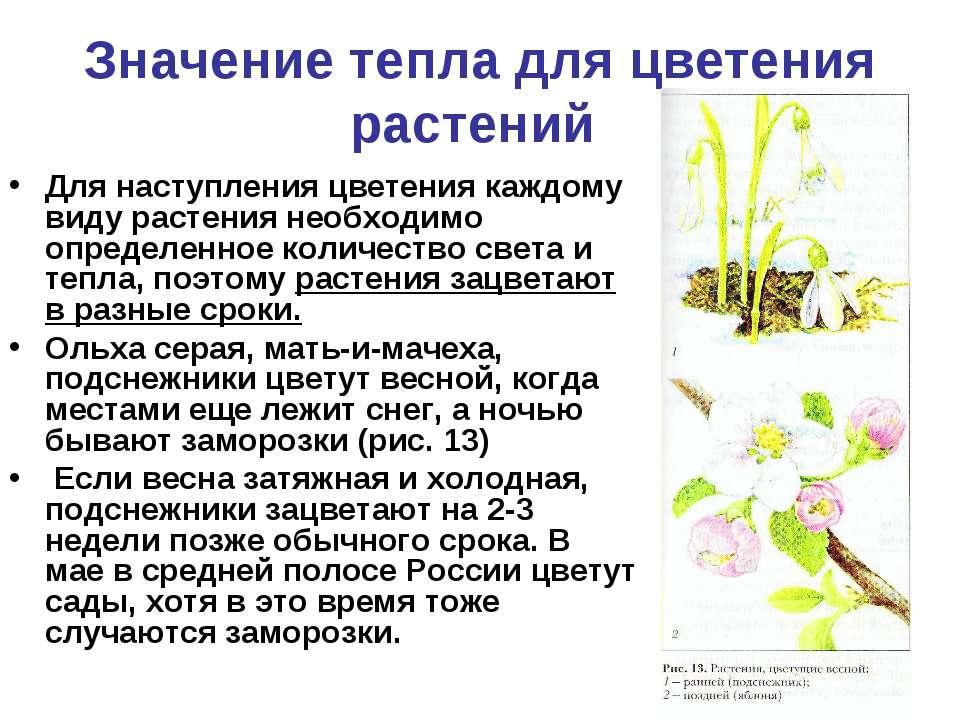 Значение тепла для цветения растений Для наступления цветения каждому виду ра...