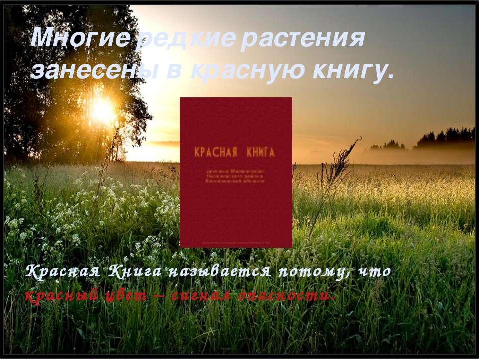 Многие редкие растения занесены в красную книгу. Красная Книга называется пот...