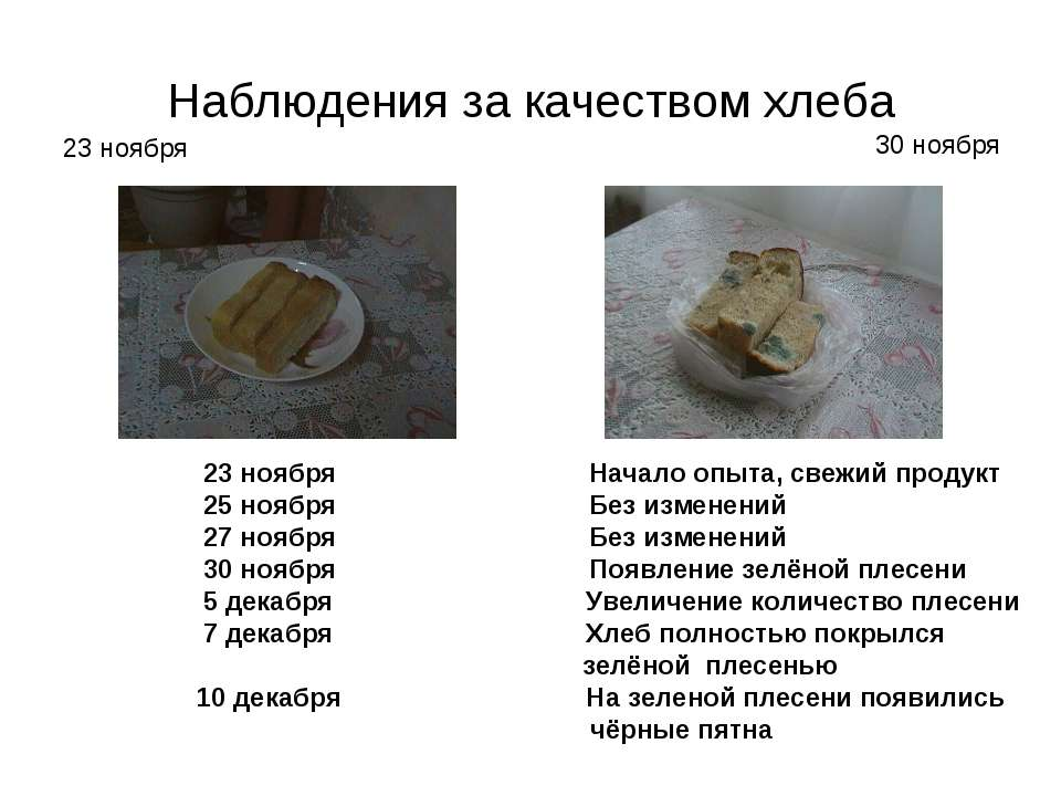 Наблюдения за качеством хлеба 23 ноября Начало опыта, свежий продукт 25 ноябр...
