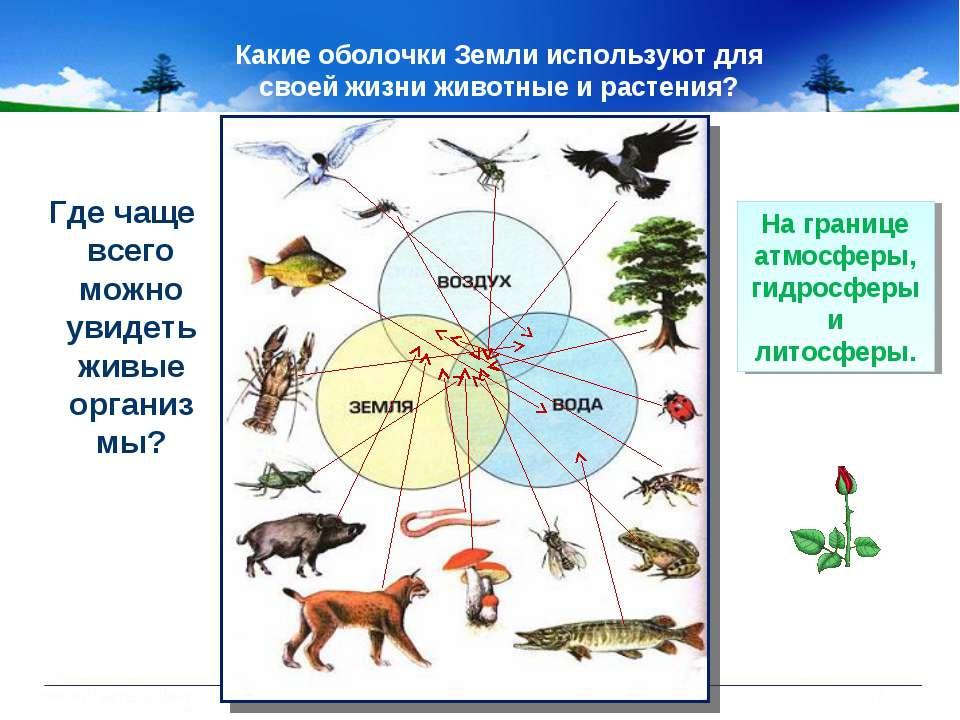 Какие оболочки Земли используют для своей жизни животные и растения? Где чаще...