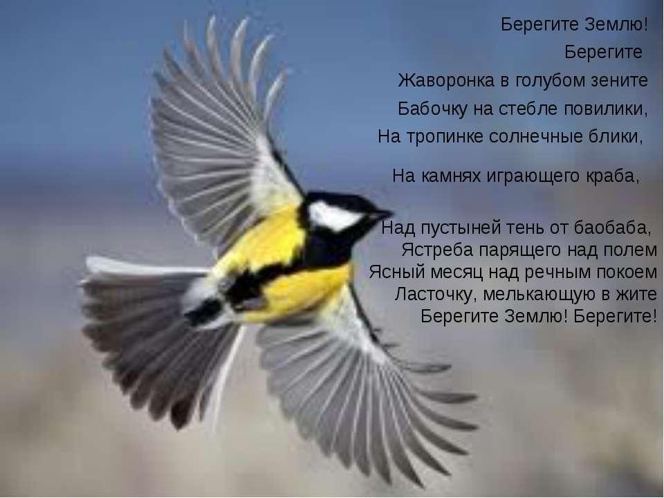 Берегите Землю! Берегите Жаворонка в голубом зените Бабочку на стебле повилик...