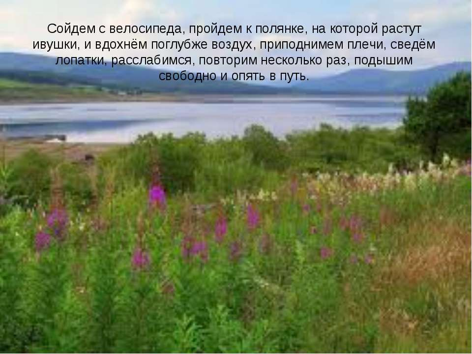 Сойдем с велосипеда, пройдем к полянке, на которой растут ивушки, и вдохнём п...