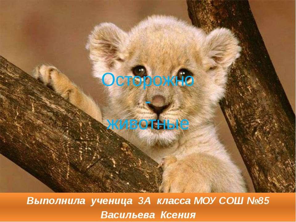 Осторожно - животные Выполнила ученица 3А класса МОУ СОШ №85 Васильева Ксения