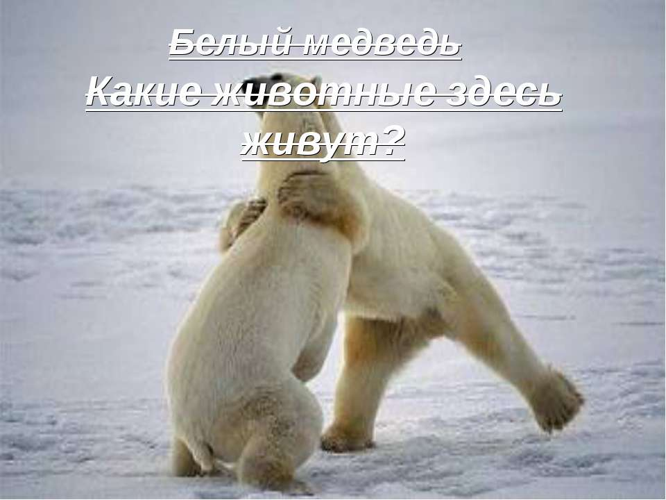 Какие животные здесь живут? Белый медведь