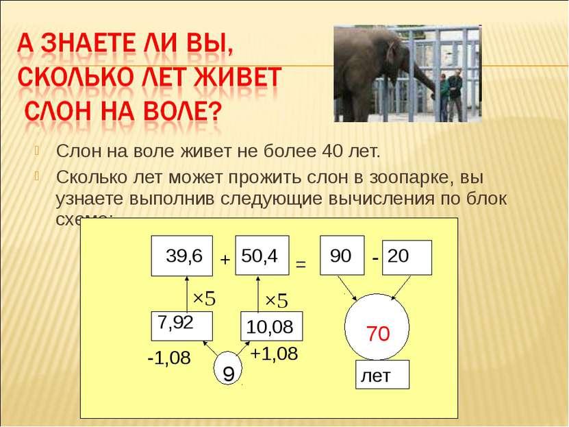 Слон на воле живет не более 40 лет. Сколько лет может прожить слон в зоопарке...