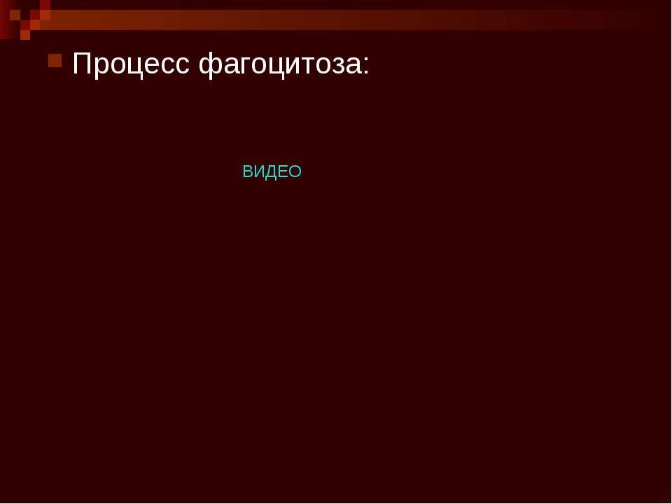 Процесс фагоцитоза: ВИДЕО