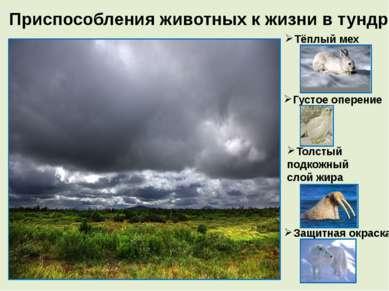 Приспособления животных к жизни в тундре Тёплый мех Густое оперение Толстый п...