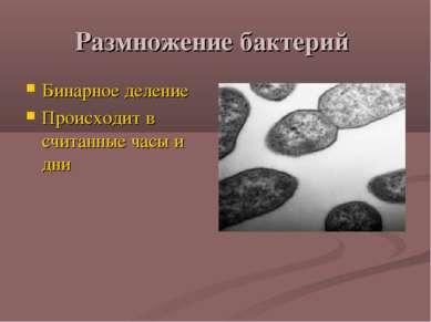 Размножение бактерий Бинарное деление Происходит в считанные часы и дни