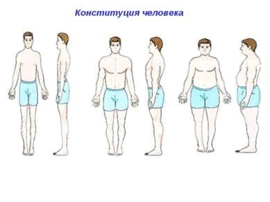Конституция человека типы телосложения человека: долихоморфный ( от греч. dol...