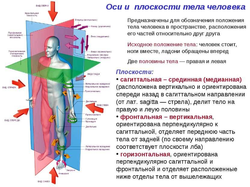 Оси и плоскости тела человека Предназначены для обозначения положения тела че...