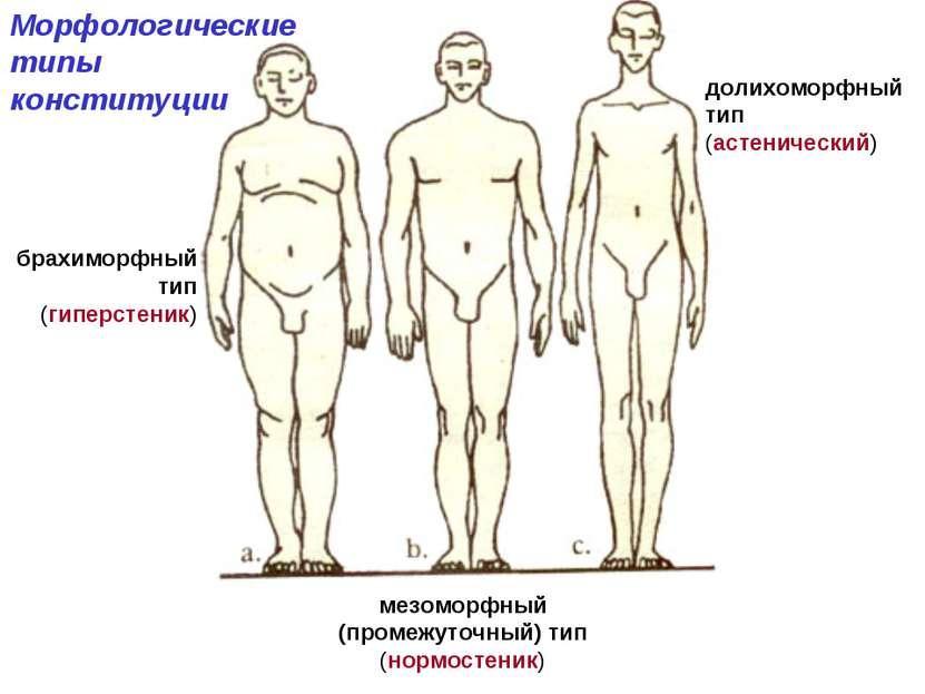 мезоморфный (промежуточный) тип (нормостеник) Морфологические типы конституци...