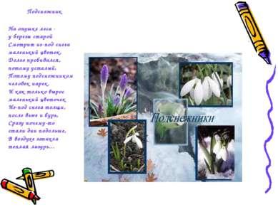 Подснежник На опушке леса - у березы старой Смотрит из-под снега маленький цв...