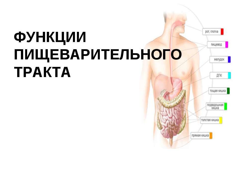 ФУНКЦИИ ПИЩЕВАРИТЕЛЬНОГО ТРАКТА