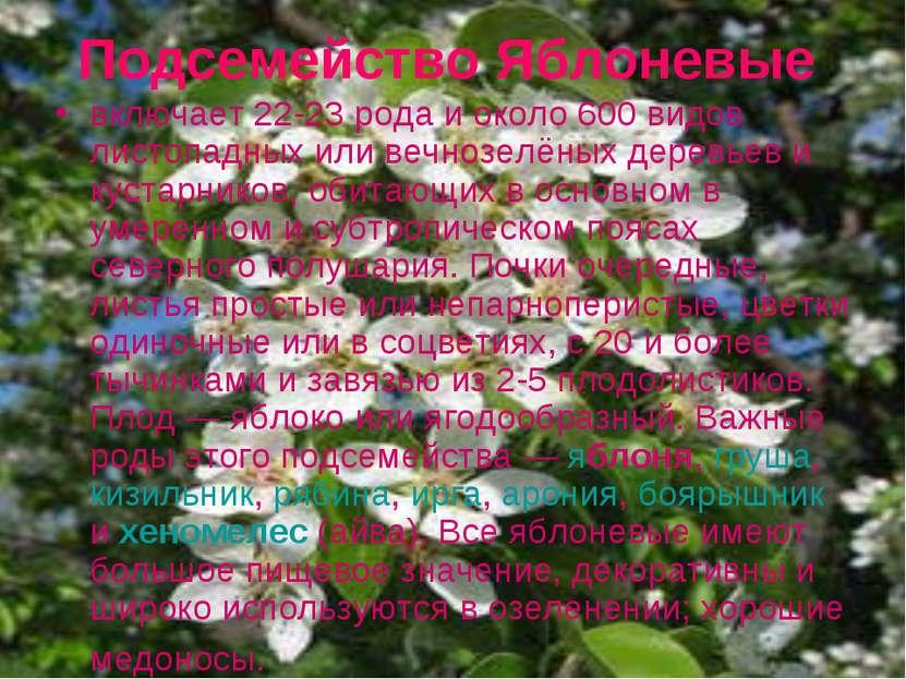 Подсемейство Яблоневые включает 22-23 рода и около 600 видов листопадных или ...