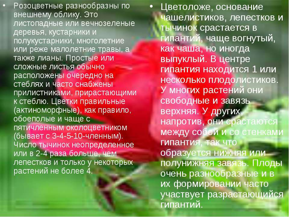 Розоцветные разнообразны по внешнему облику. Это листопадные или вечнозеленые...