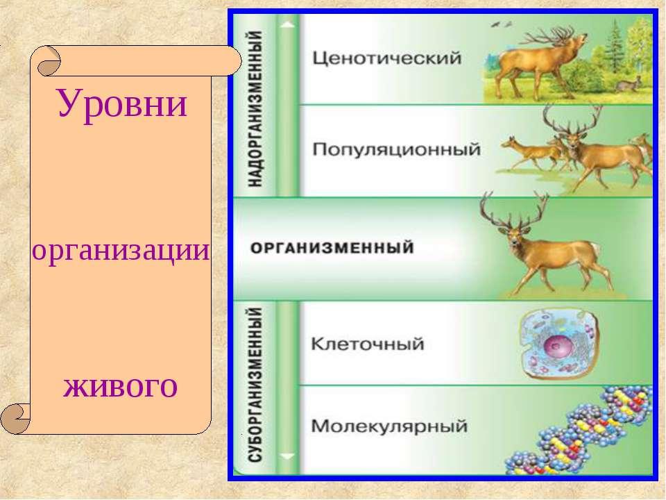 Уровни организации живого