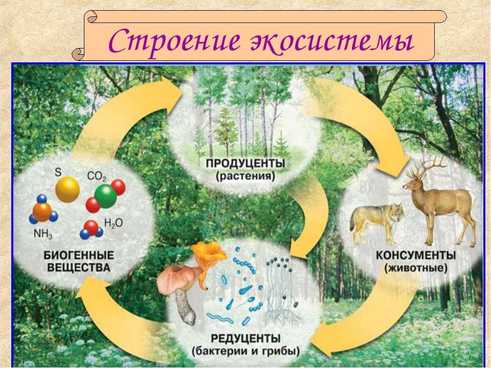 Строение экосистемы