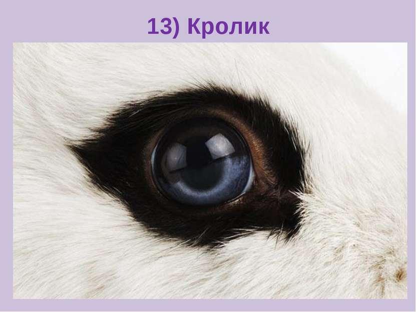 13) Кролик