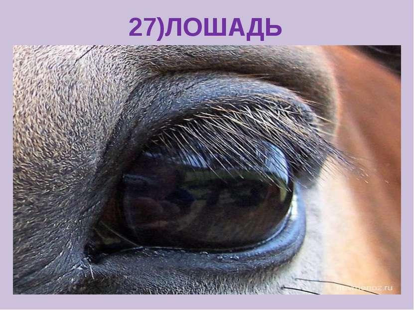 27)ЛОШАДЬ