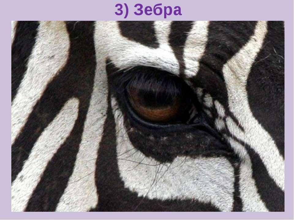 3) Зебра