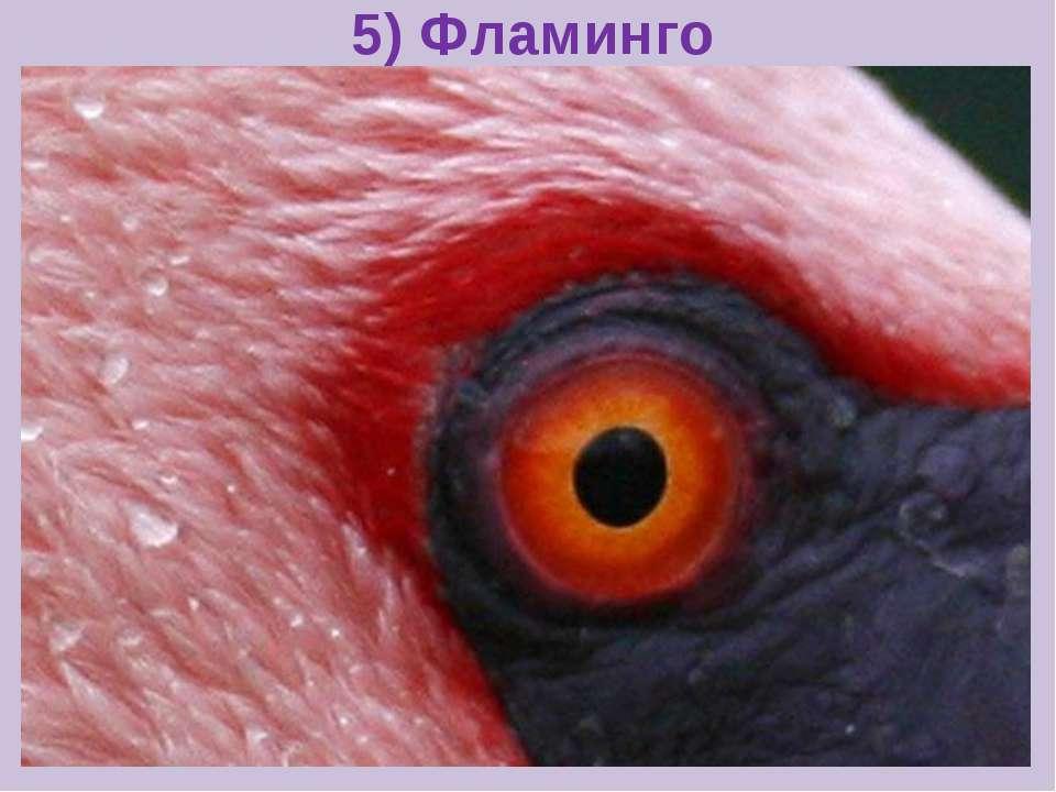 5) Фламинго