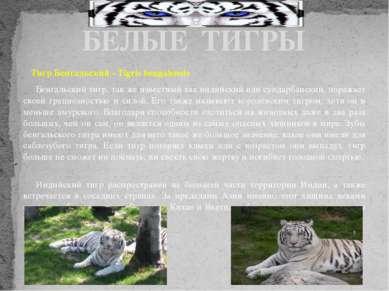 Тигр Бенгальский - Tigris bengalensis Бенгальский тигр, так же известный как ...