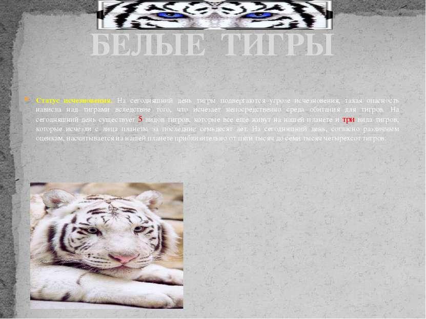 Статус исчезновения. На сегодняшний день тигры подвергаются угрозе исчезновен...