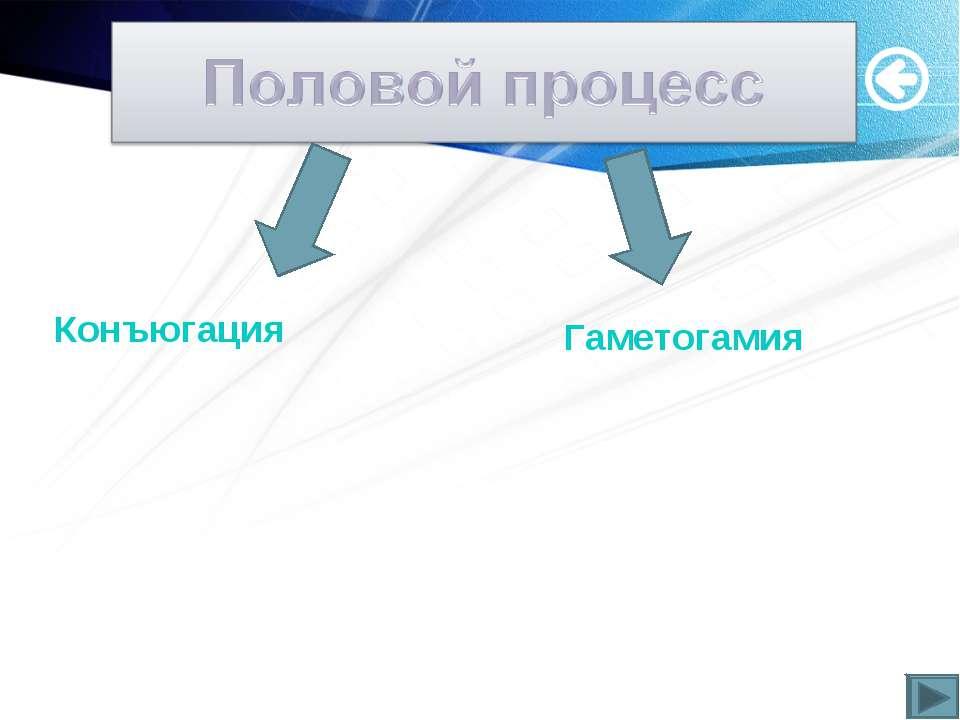Конъюгация Гаметогамия