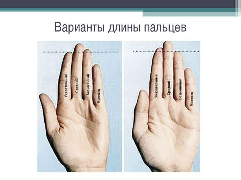 Варианты длины пальцев