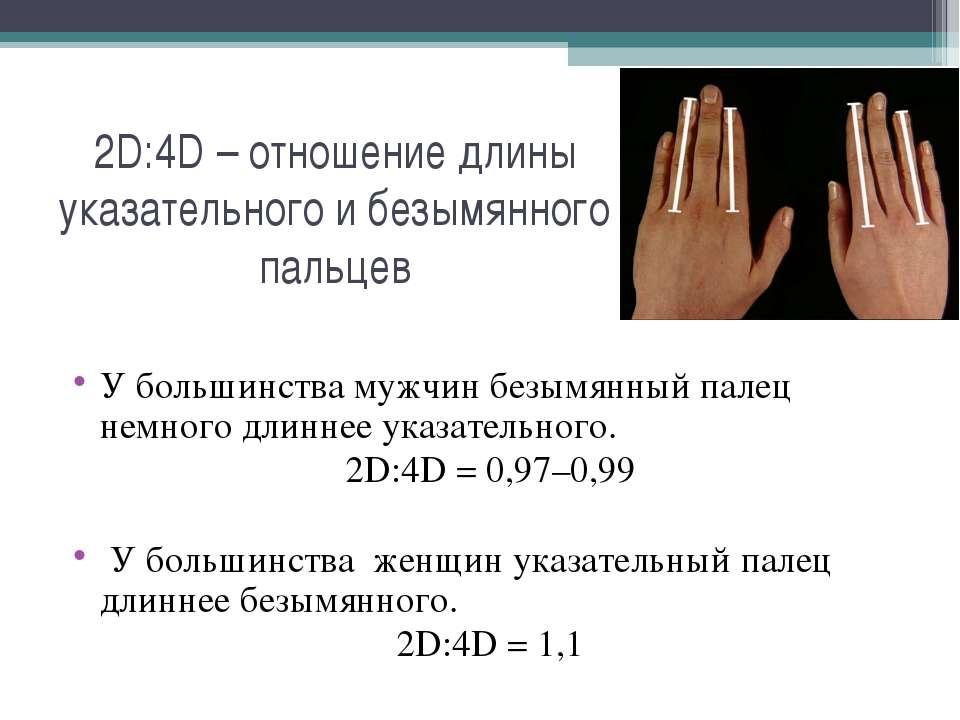 2D:4D – отношение длины указательного и безымянного пальцев У большинства муж...