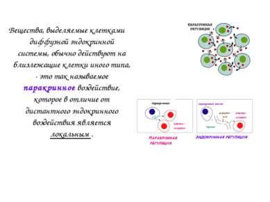 Вещества, выделяемые клетками диффузной эндокринной системы, обычно действуют...