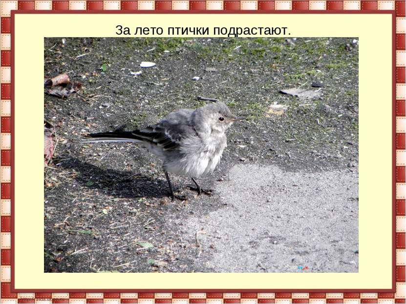 За лето птички подрастают.