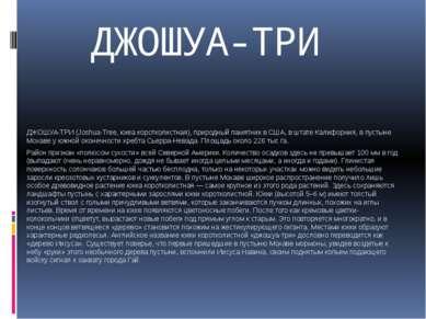 ДЖОШУА-ТРИ ДЖОШУА-ТРИ (Joshua-Treе, юкка коротколистная), природный памятник ...