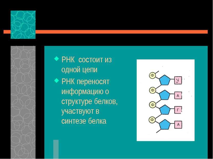 РНК состоит из одной цепи РНК переносят информацию о структуре белков, участв...