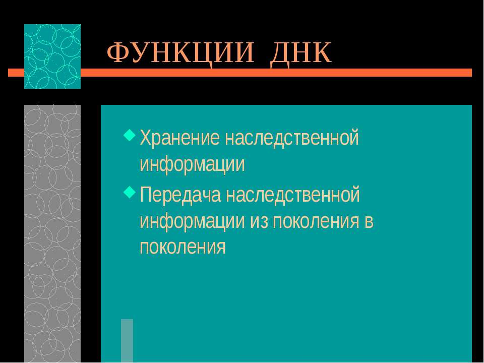 ФУНКЦИИ ДНК Хранение наследственной информации Передача наследственной информ...