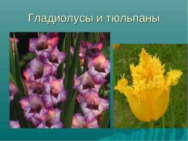 Гладиолусы и тюльпаны