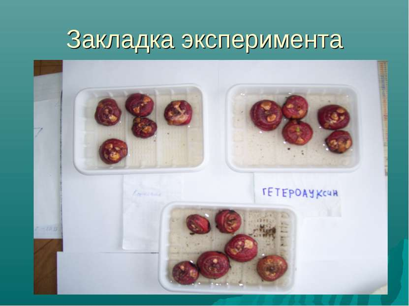 Закладка эксперимента
