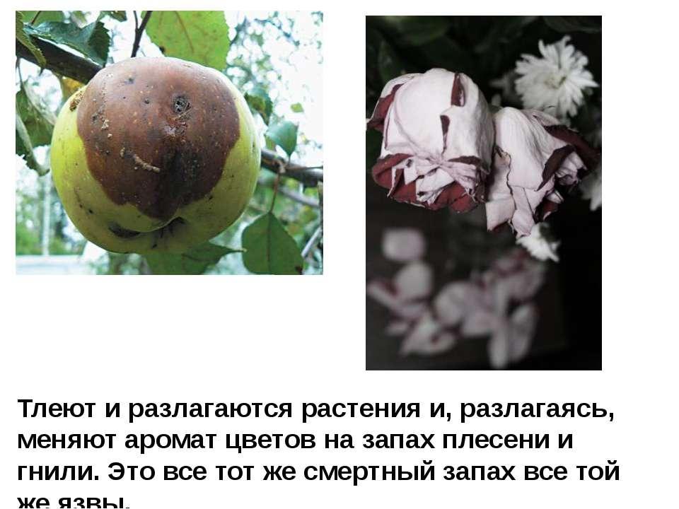 Тлеют и разлагаются растения и, разлагаясь, меняют аромат цветов на запах пле...