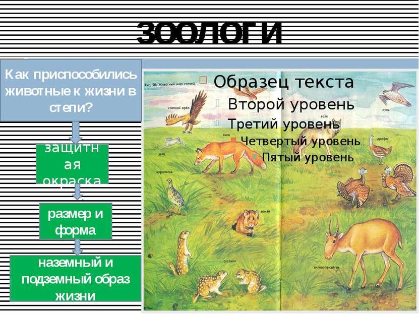 зоологи Как приспособились животные к жизни в степи? защитная окраска размер ...