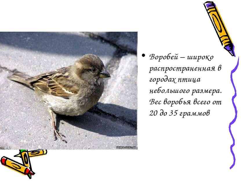 Воробей – широко распространенная в городах птица небольшого размера. Вес вор...