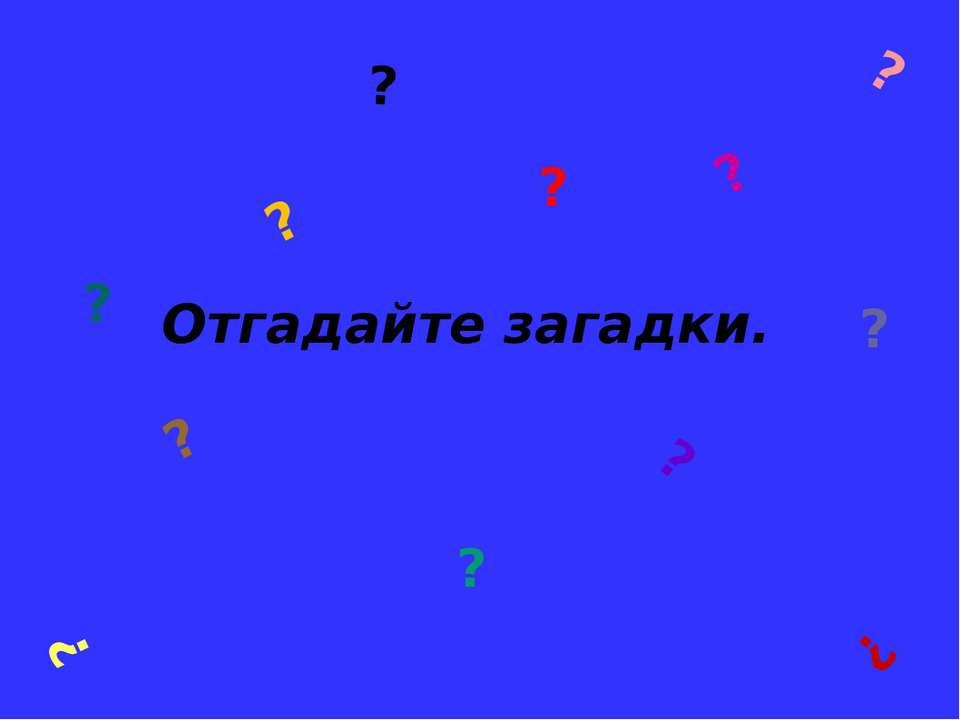 ? Отгадайте загадки. ? ? ? ? ? ? ? ? ? ? ? ?