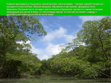 """Самые красивые и пышные тропические леса в мире, """"легкие нашей планеты"""", нахо..."""